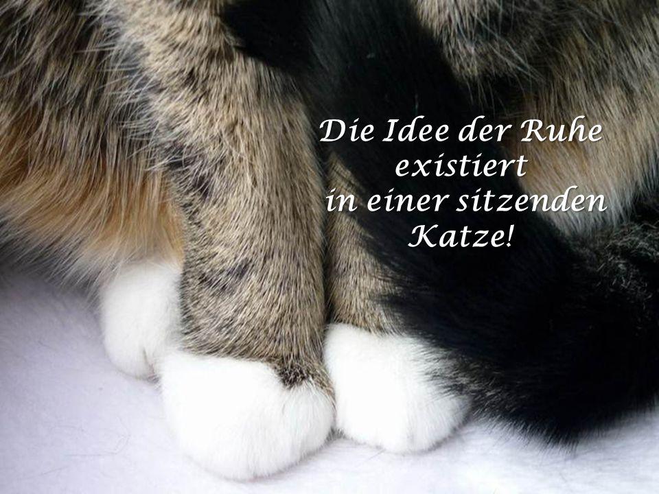 Die Idee der Ruhe existiert in einer sitzenden Katze!