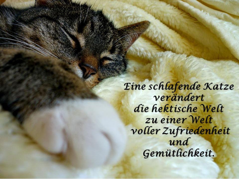 Eine schlafende Katze verändert voller Zufriedenheit und