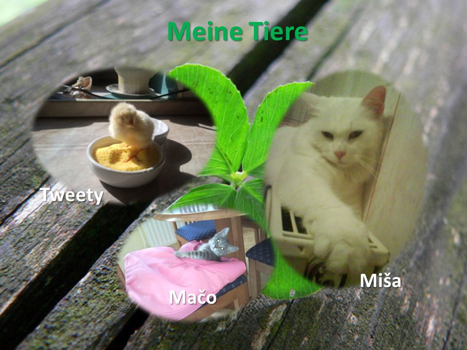 Meine Tiere Tweety Miša Mačo
