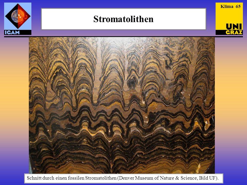 Klima 65 Stromatolithen.