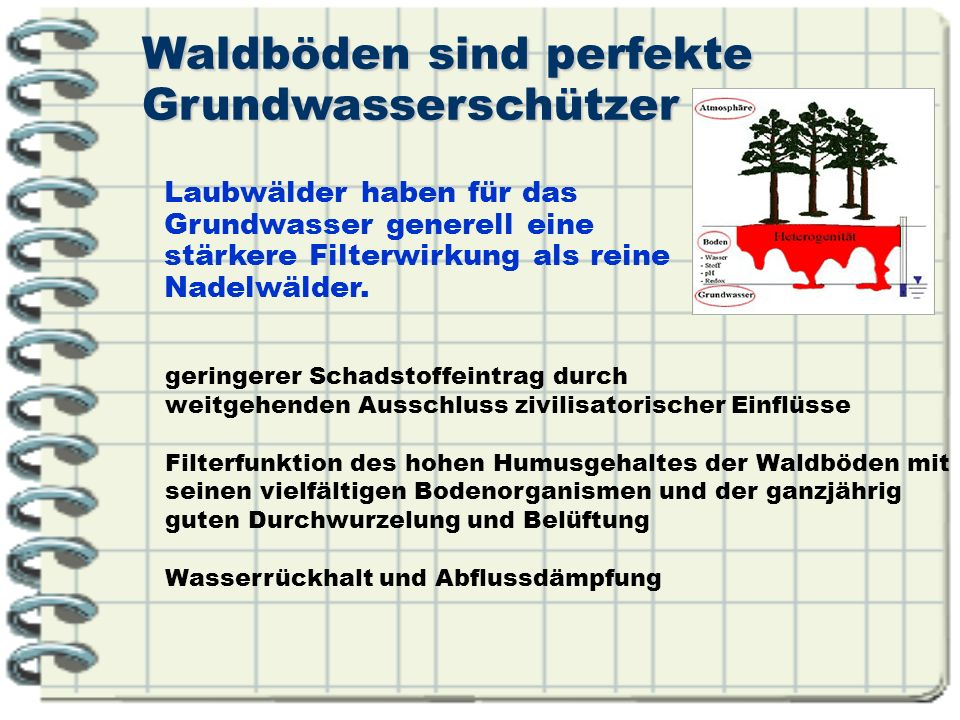 Waldböden sind perfekte Grundwasserschützer