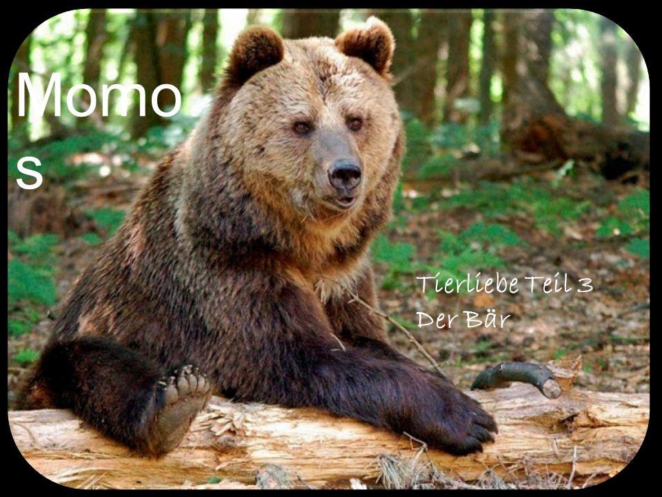 Momos Tierliebe Teil 3 Der Bär