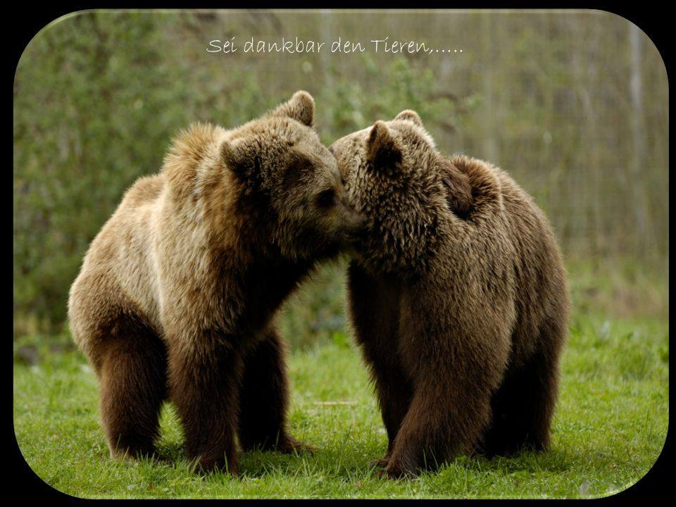Sei dankbar den Tieren,…..