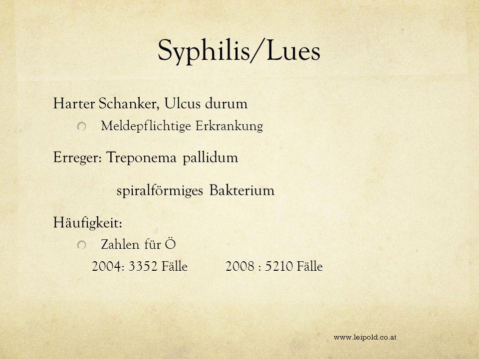Syphilis/Lues Harter Schanker, Ulcus durum Erreger: Treponema pallidum