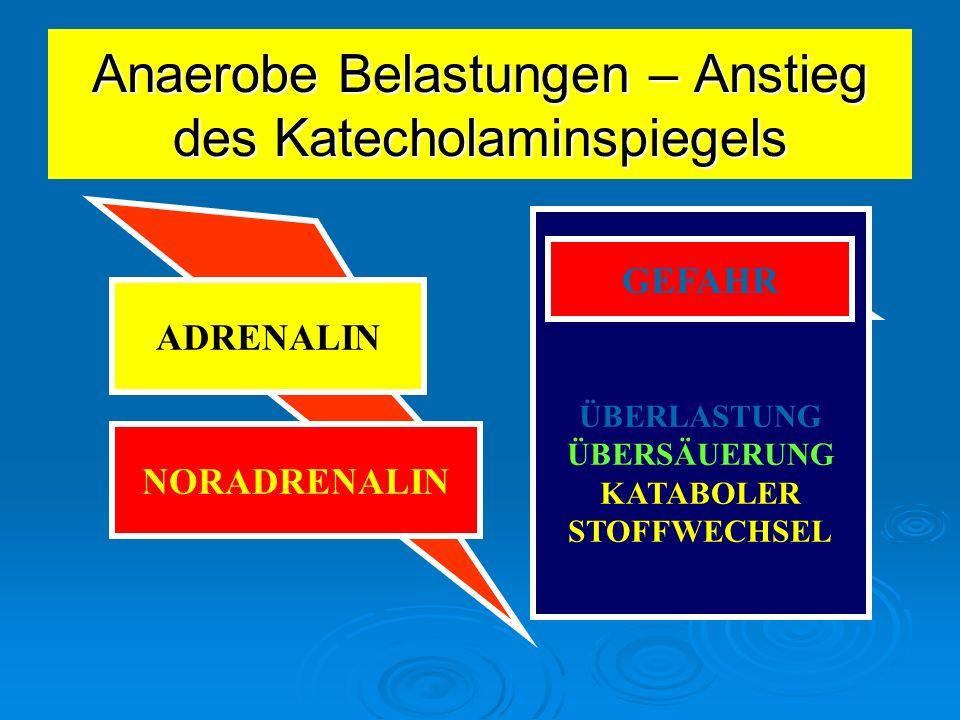 Anaerobe Belastungen – Anstieg des Katecholaminspiegels