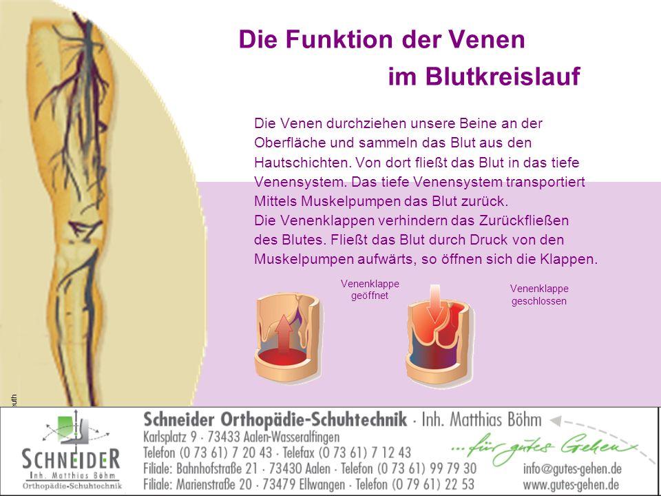 Gemütlich Anatomie Der Unteren Extremitäten Venen Galerie ...