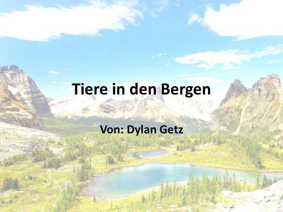 Tiere in den Bergen Von: Dylan Getz