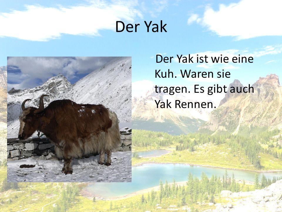 Der Yak Der Yak ist wie eine Kuh. Waren sie tragen. Es gibt auch Yak Rennen.