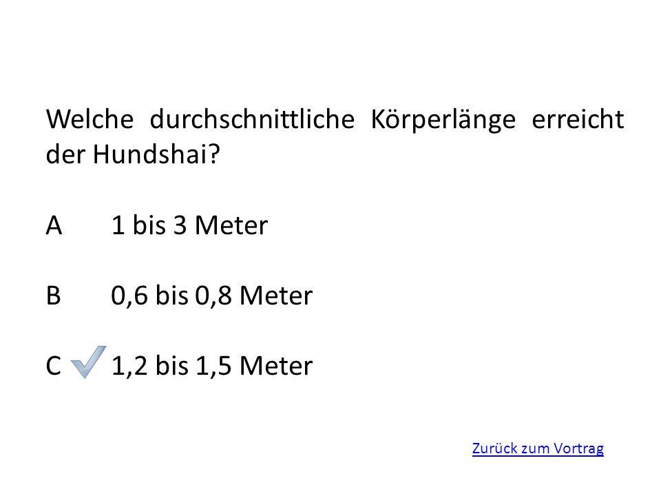 Welche durchschnittliche Körperlänge erreicht der Hundshai