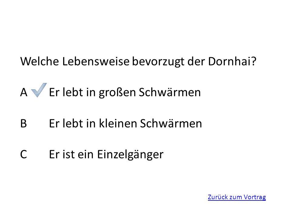 Welche Lebensweise bevorzugt der Dornhai