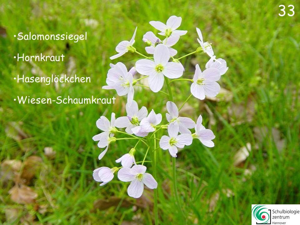 34 Reiherschnabel Wald-Veilchen Storchschnabel Gundermann