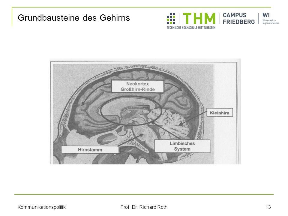 Grundbausteine des Gehirns