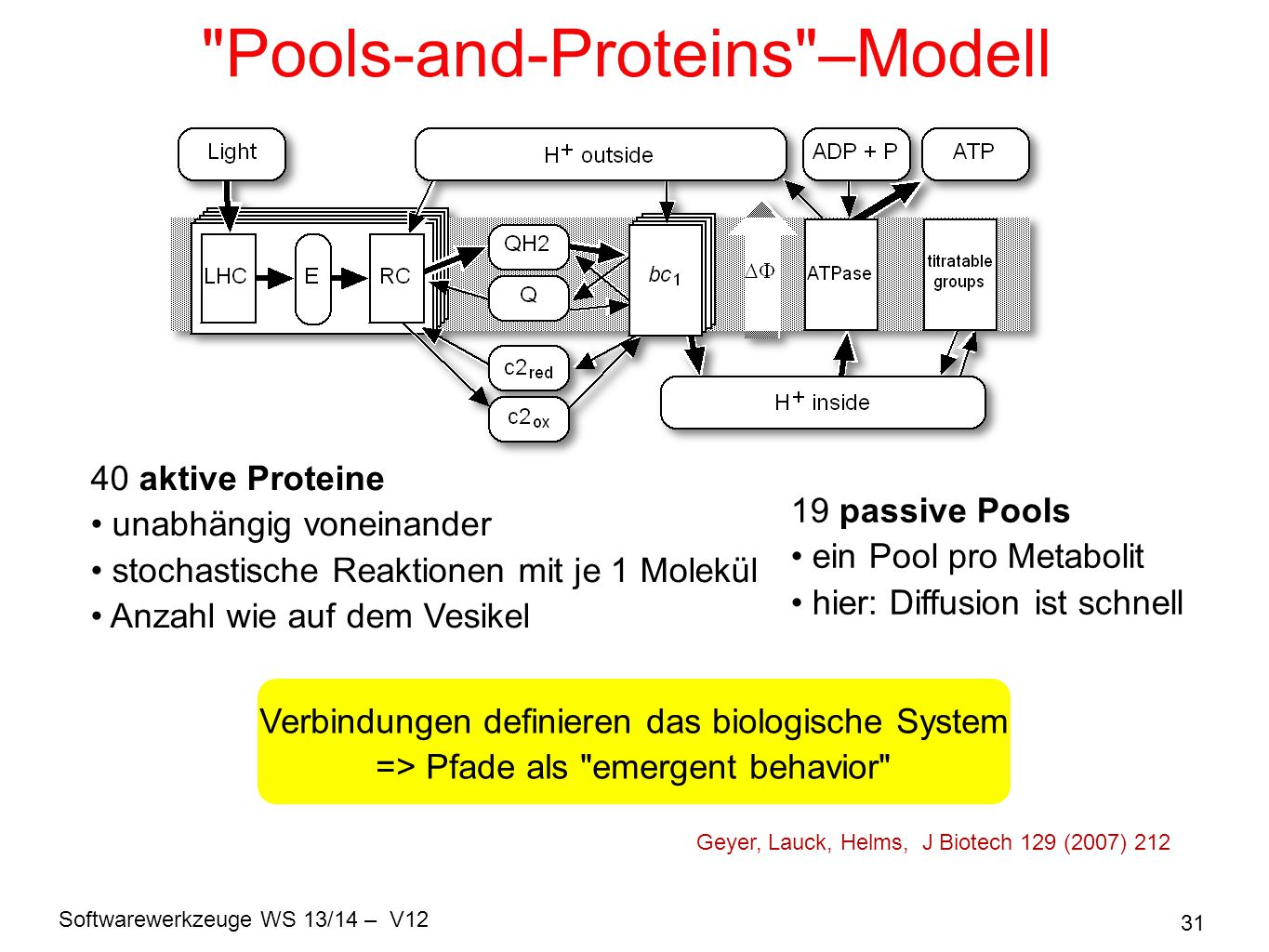 Pools-and-Proteins –Modell