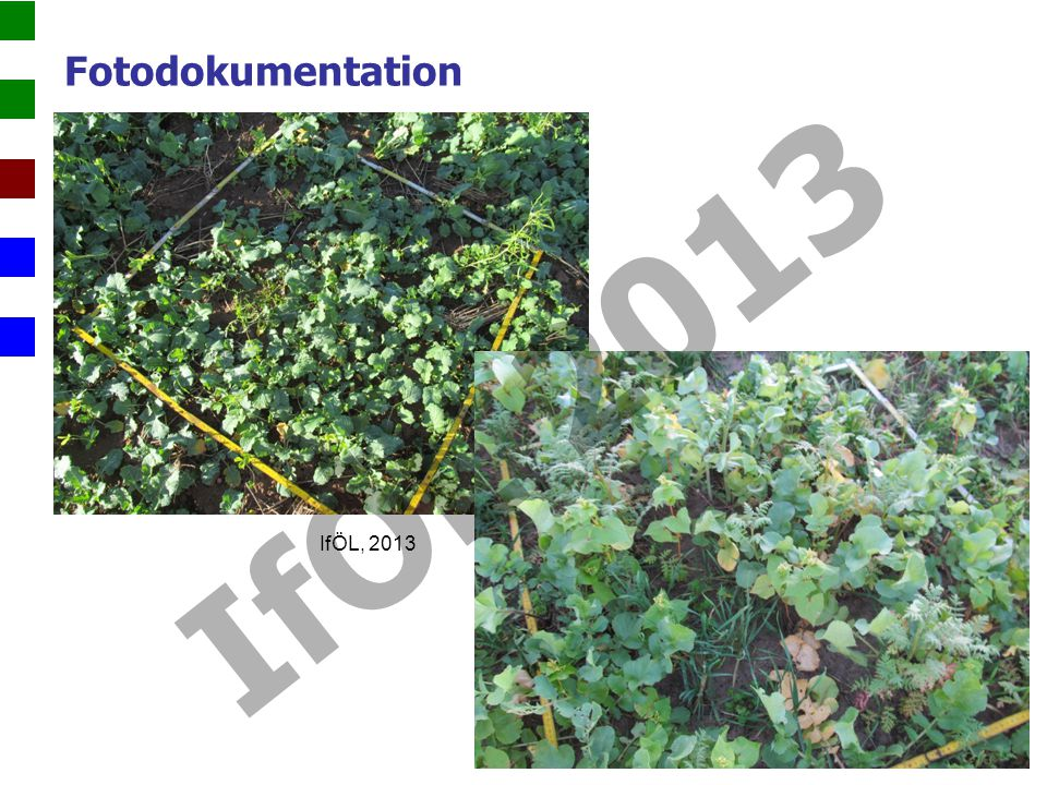 Fotodokumentation IfÖL 2013 IfÖL, 2013