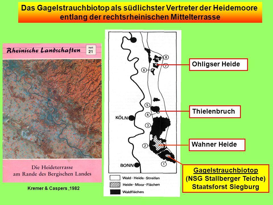 Das Gagelstrauchbiotop als südlichster Vertreter der Heidemoore