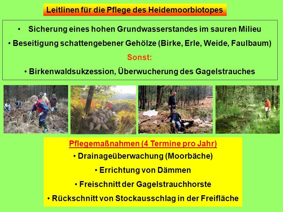 Leitlinen für die Pflege des Heidemoorbiotopes