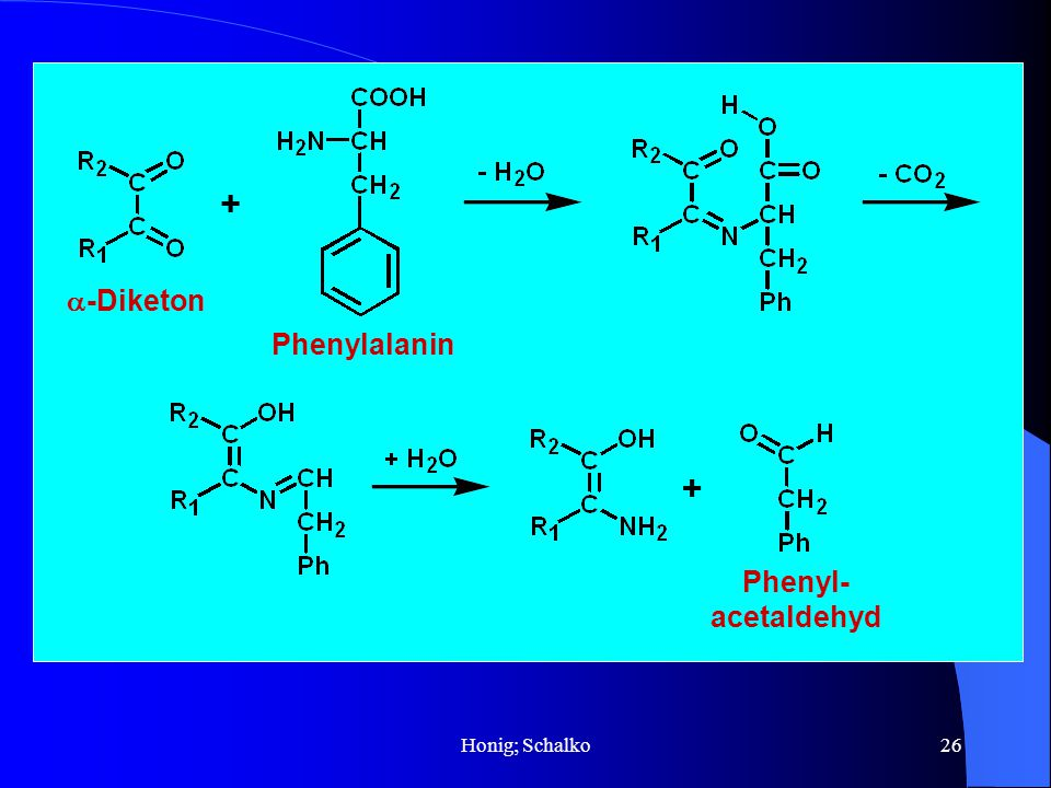 a-Diketon Phenylalanin + + Phenyl- acetaldehyd Honig; Schalko