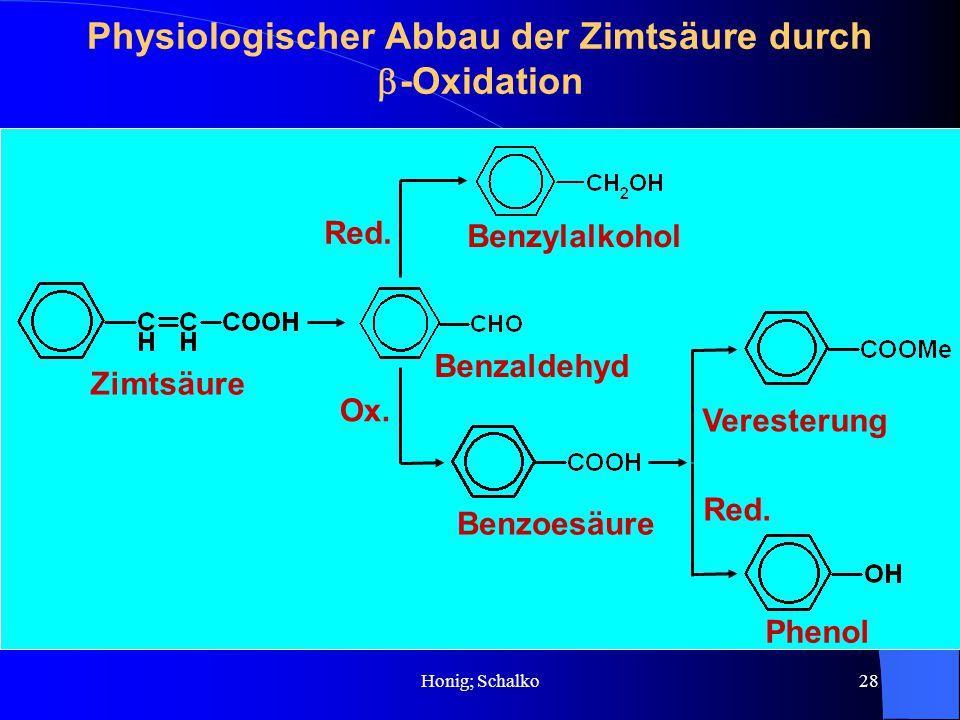 Physiologischer Abbau der Zimtsäure durch b-Oxidation