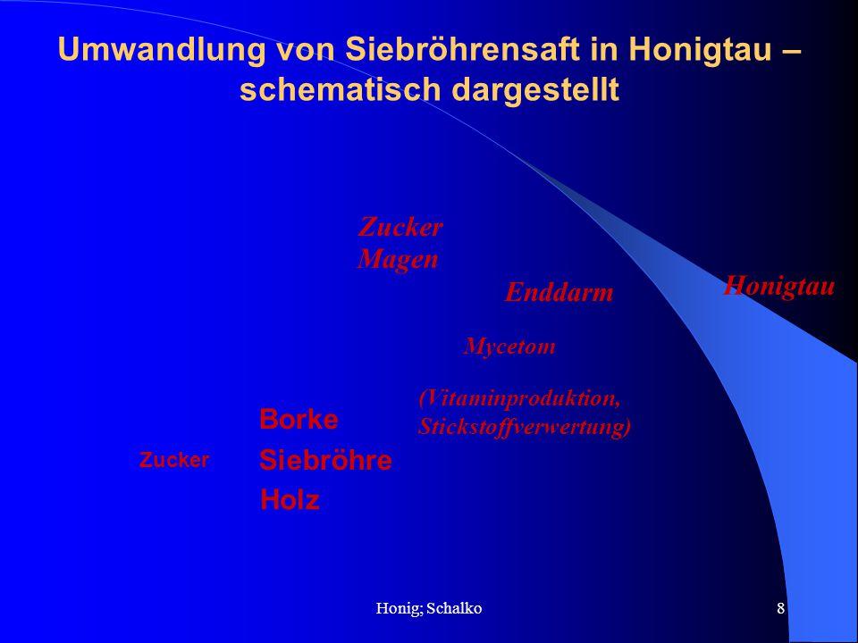 Umwandlung von Siebröhrensaft in Honigtau – schematisch dargestellt