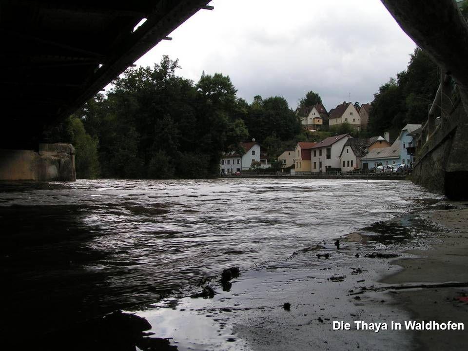 Die Thaya in Waidhofen