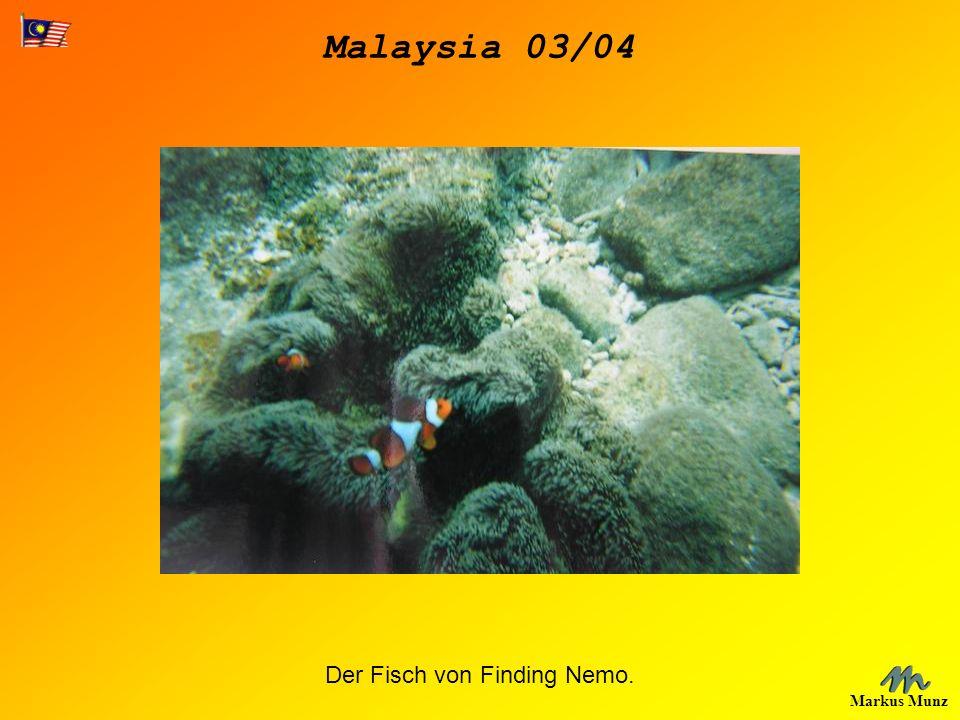 Der Fisch von Finding Nemo.