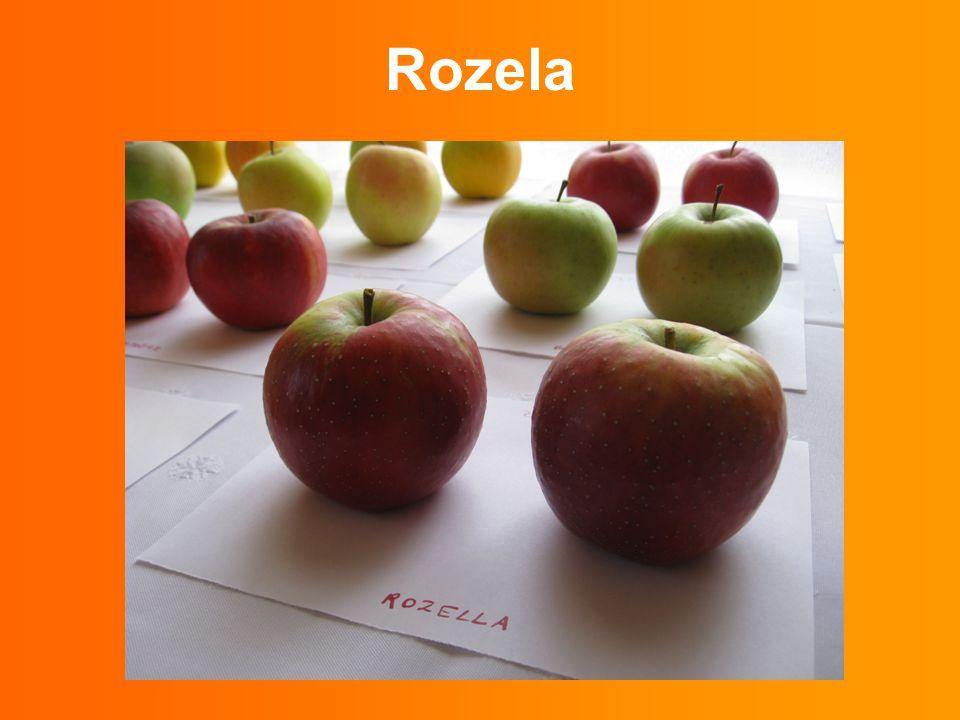 Rozela