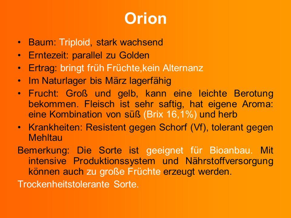 Orion Baum: Triploid, stark wachsend Erntezeit: parallel zu Golden