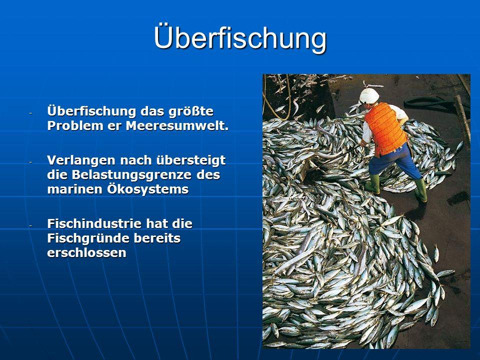 Überfischung Überfischung das größte Problem er Meeresumwelt.