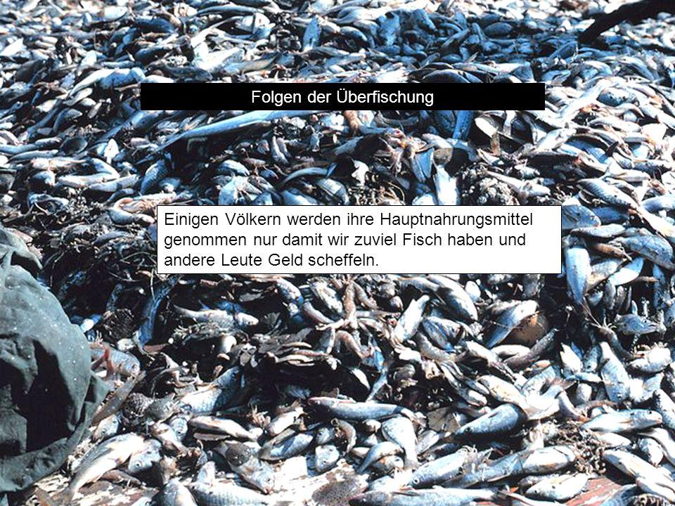 Folgen der Überfischung