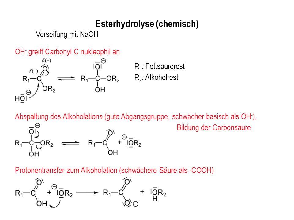 Esterhydrolyse (chemisch)