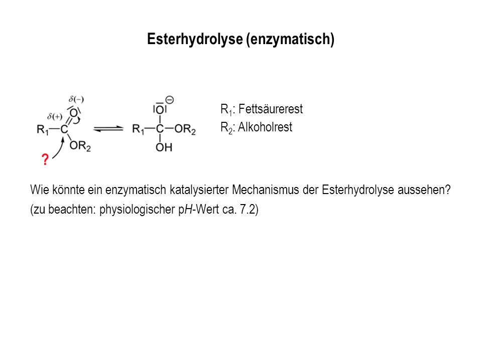 Esterhydrolyse (enzymatisch)