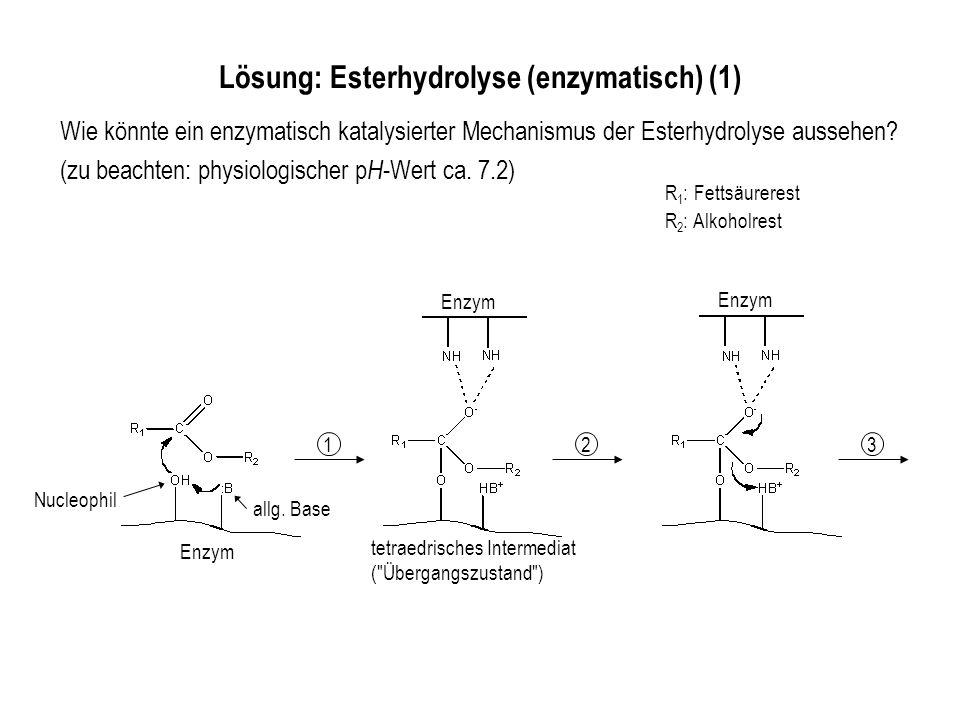 Lösung: Esterhydrolyse (enzymatisch) (1)