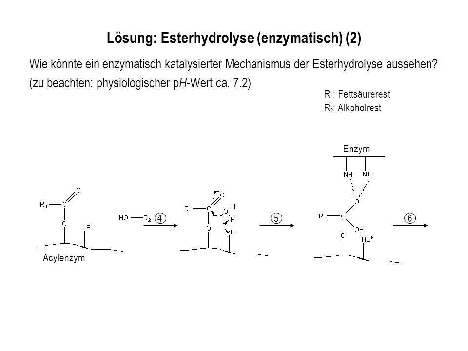 Lösung: Esterhydrolyse (enzymatisch) (2)