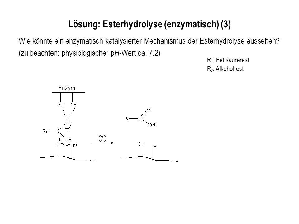 Lösung: Esterhydrolyse (enzymatisch) (3)