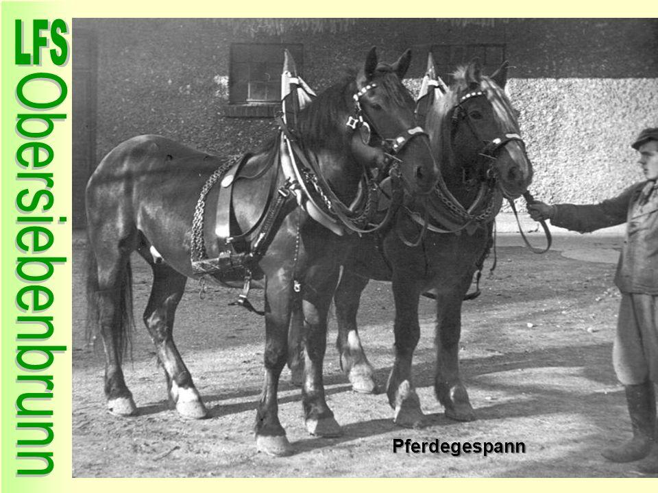 Pferdegespann 15