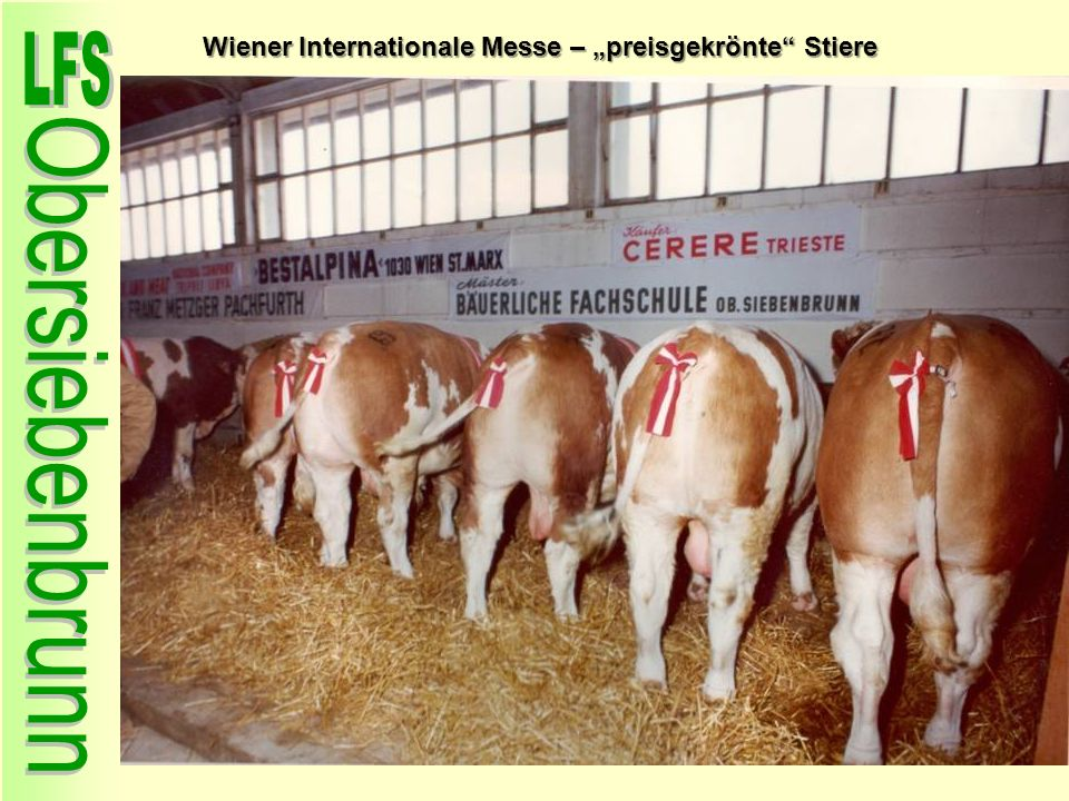 "Wiener Internationale Messe – ""preisgekrönte Stiere"