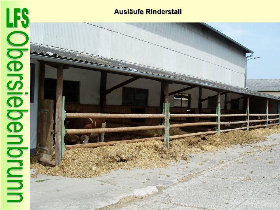 Ausläufe Rinderstall 47