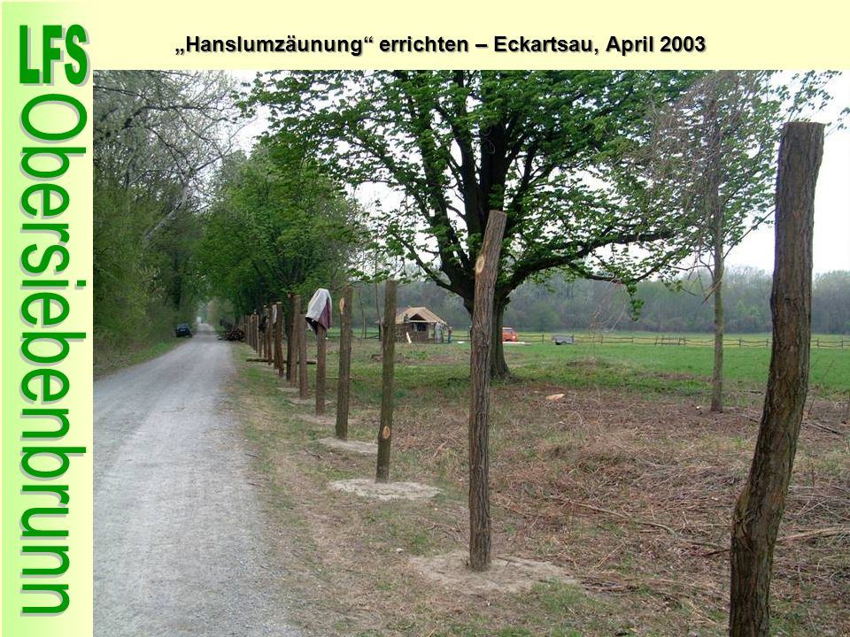 """""""Hanslumzäunung errichten – Eckartsau, April 2003"""