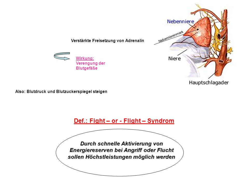 Def.: Fight – or - Flight – Syndrom