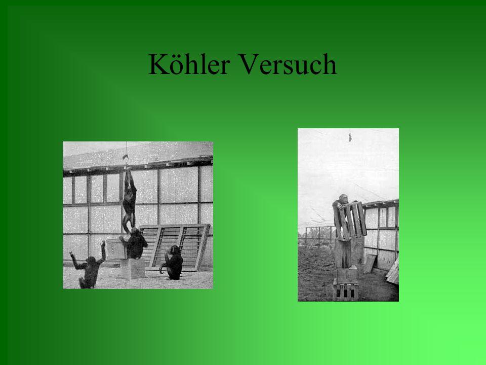 Köhler Versuch