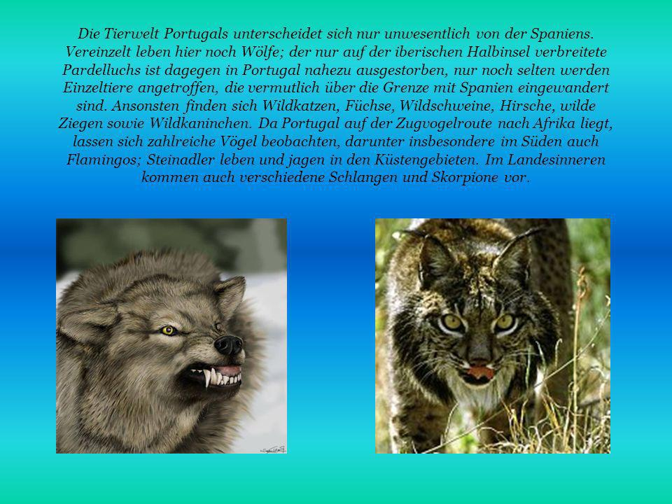 Die Tierwelt Portugals unterscheidet sich nur unwesentlich von der Spaniens.