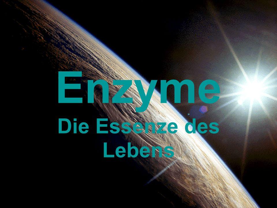 Enzyme Die Essenze des Lebens