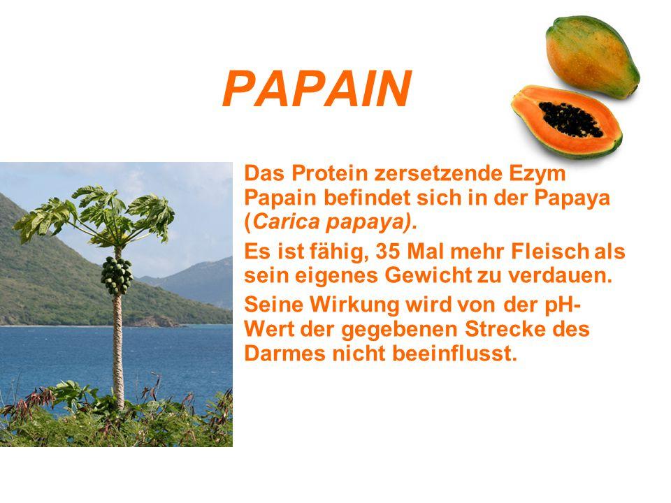 PAPAIN Das Protein zersetzende Ezym Papain befindet sich in der Papaya (Carica papaya).