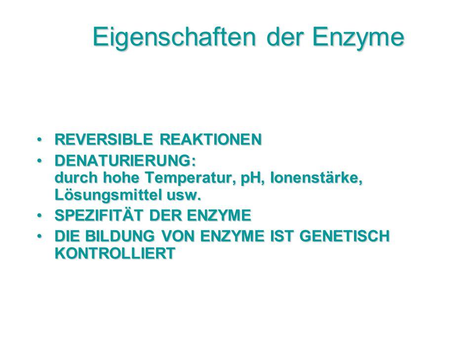 Eigenschaften der Enzyme