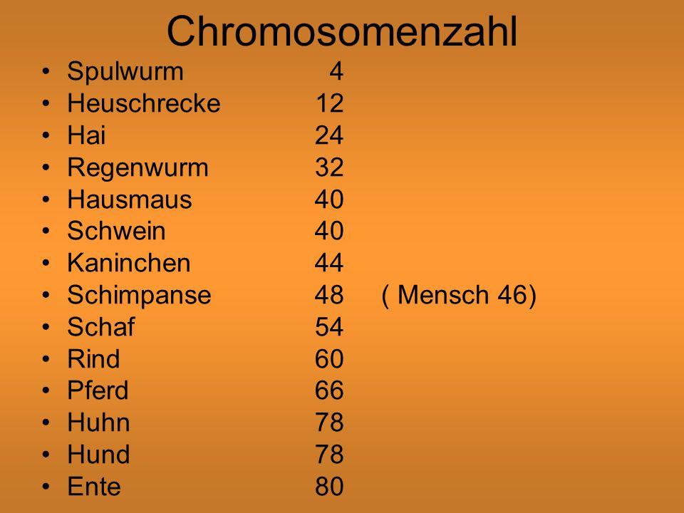 Chromosomenzahl Spulwurm 4 Heuschrecke 12 Hai 24 Regenwurm 32