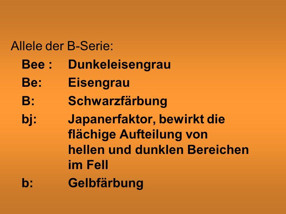 Allele der B-Serie: Bee : Dunkeleisengrau Be: Eisengrau. B: Schwarzfärbung.