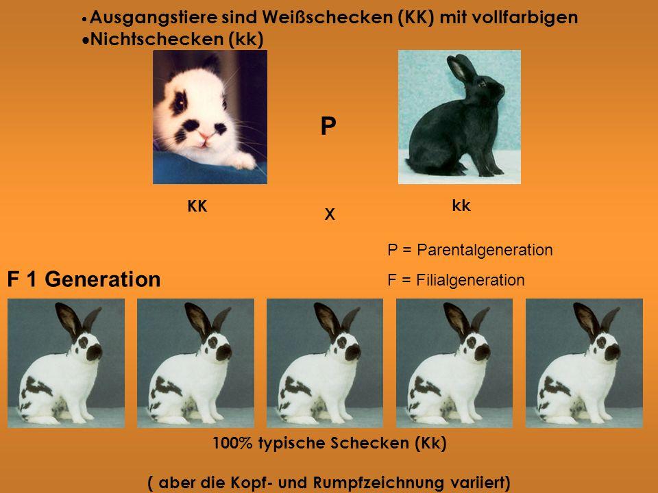 P F 1 Generation Nichtschecken (kk) kk X 100% typische Schecken (Kk)