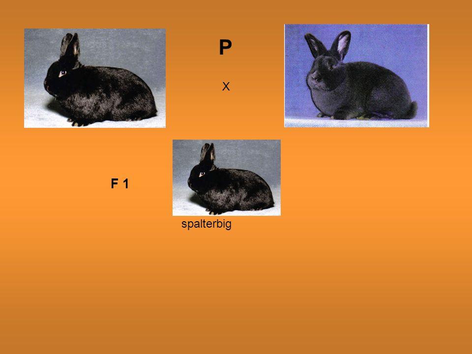 P X F 1 spalterbig