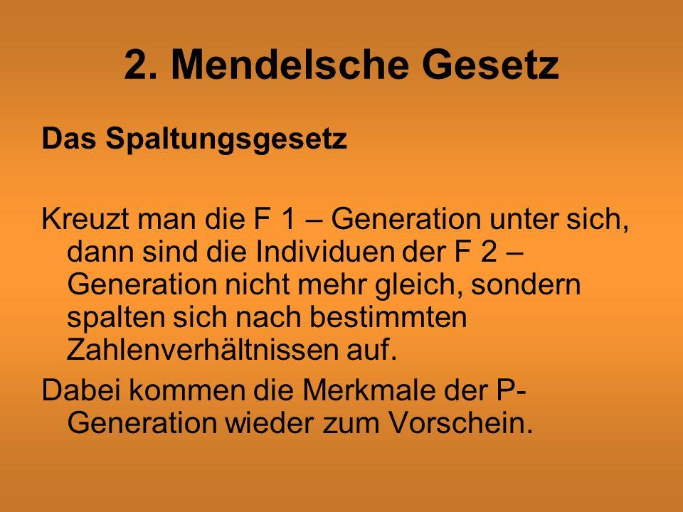 2. Mendelsche Gesetz Das Spaltungsgesetz