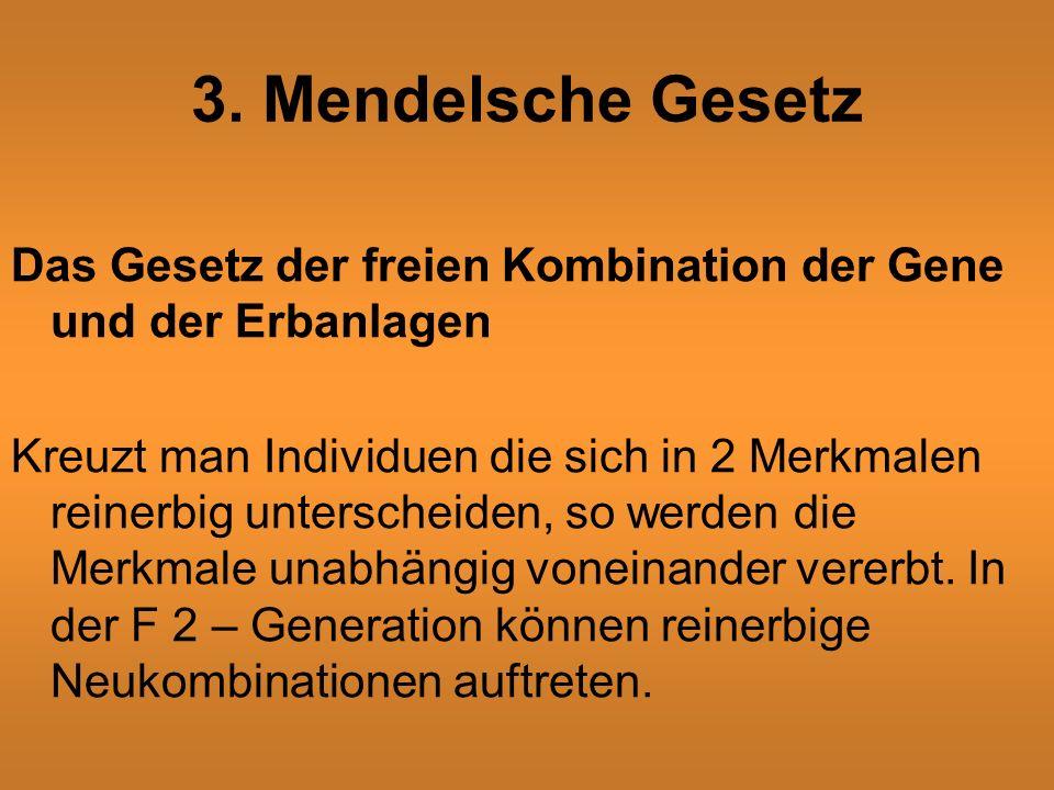 3. Mendelsche Gesetz Das Gesetz der freien Kombination der Gene und der Erbanlagen.